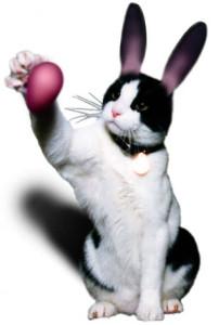 EasterKitty300[1]