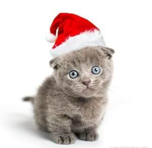 christmas-kitty[1]