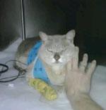 eric-in-hospital[1]