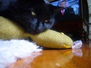 mac_fayes_diabetic_cat[1]